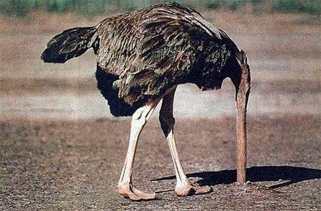 ostrich_head_in_ground_Full