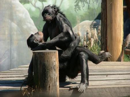 Monkey Lovin'